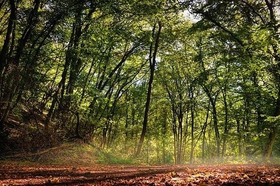 forest-4496635_640.jpg