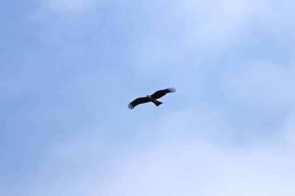 kimsbird18240.jpg