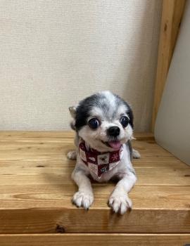 1.12.21ユズちゃん
