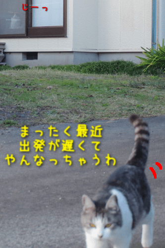 20191120202539f03.png