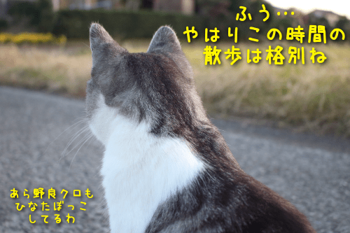 2019112020254069f.png