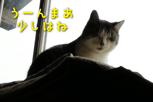 20191124154856c98.png
