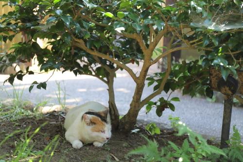 くるりん木陰でお休み