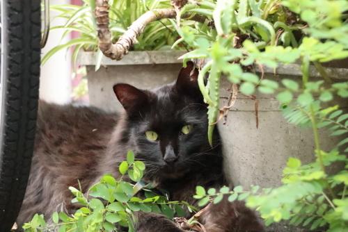 居酒屋の看板猫