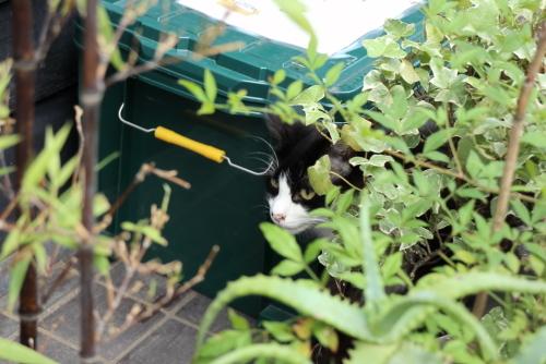 居酒屋の看板猫2
