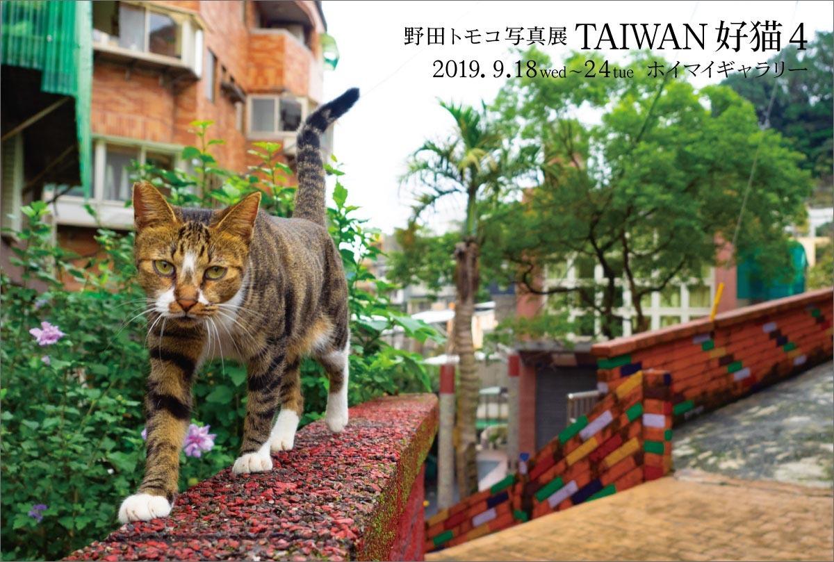 TaiwanHaomao4-DM-omote.jpg