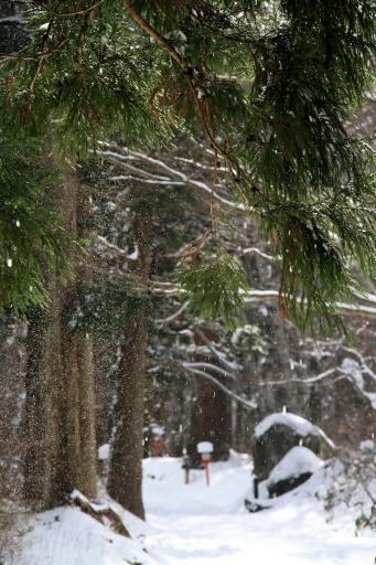 大山寺の雪道を
