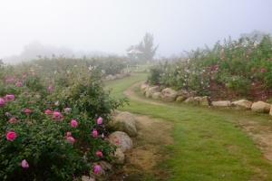 薔薇の散歩道