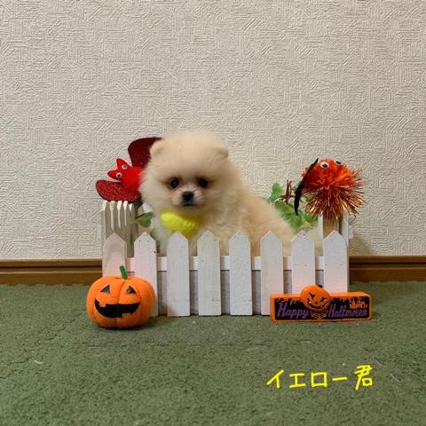 20191017 2