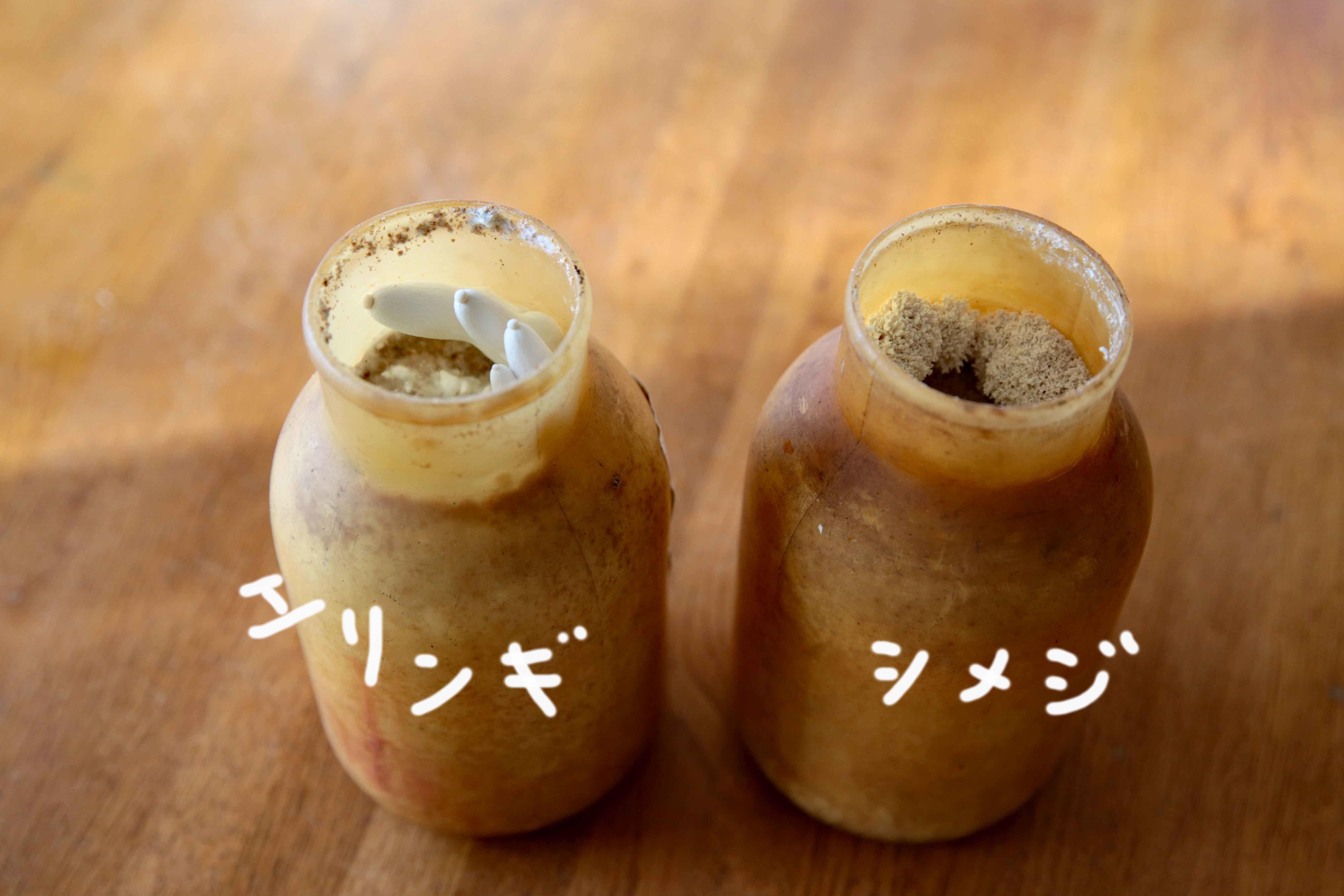 キノコ栽培10日目m