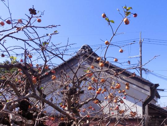 18白壁に柿