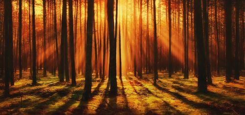 forest-4412721_960_720.jpg