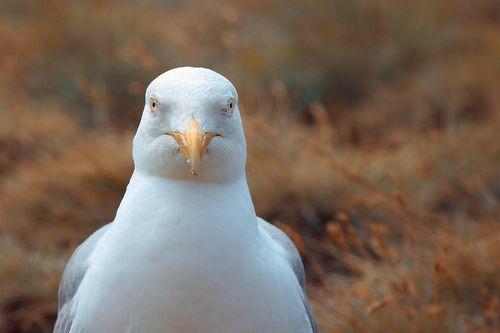 seagull-4688989_960_720.jpg