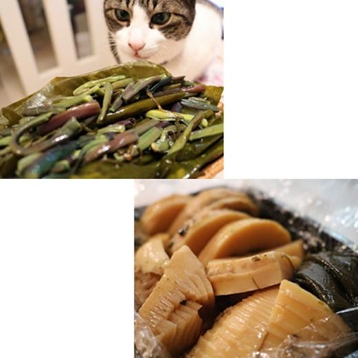 cats11_20191116215451661.jpg