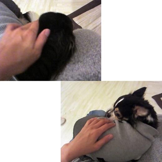 cats1_20190917134703d94.jpg