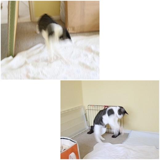 cats_201910042154083fe.jpg