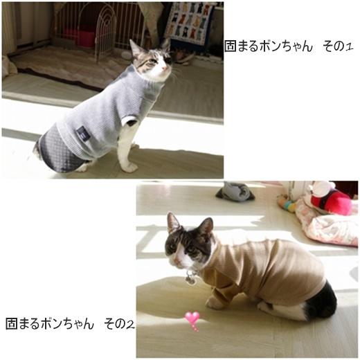 cats_20191120220040131.jpg