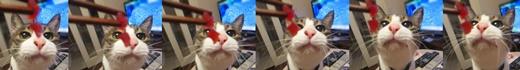 cats_2019121022325891a.jpg