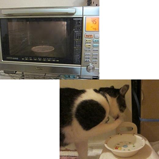 cats_20191217124838fe1.jpg