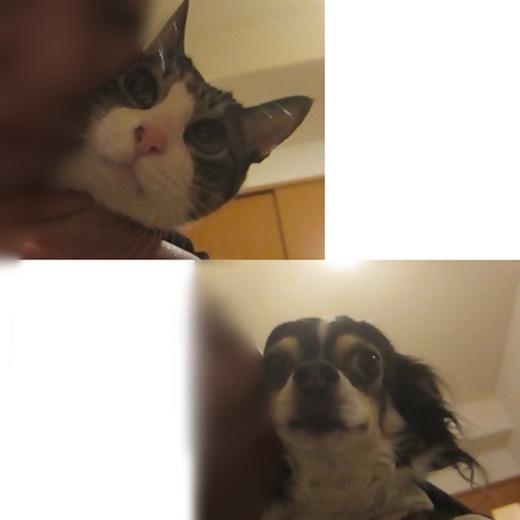 cats_20191217230159075.jpg