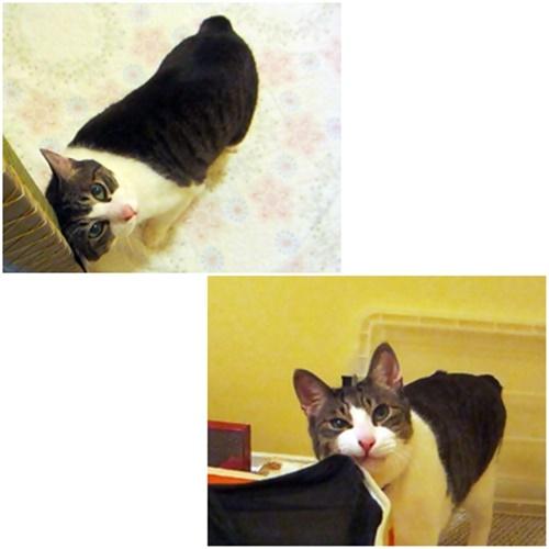cats_20200203173520878.jpg