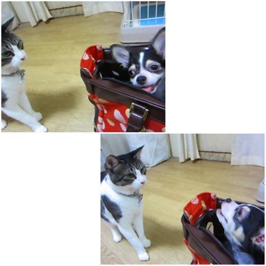 cats_20200205205738014.jpg