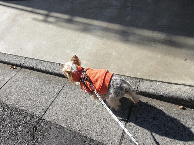 191203up⑤パジャマのまま近所グルリ散歩へ
