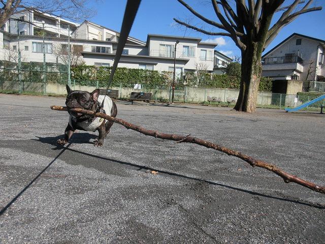 200129up04お子様いなくなったところで枝遊び開始