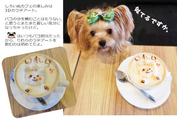 20191014らてアート@しろいぬカフェ