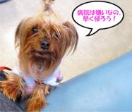 2012年01月22日①パコのゲコが続くので杉並動物病院へ行く (1)openingsize