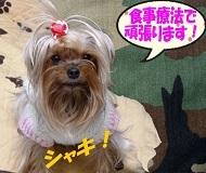 2012年01月29日①杉並動物病院へ (3) openingsize