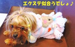 2012年02月27日①セピア (1)openingsize