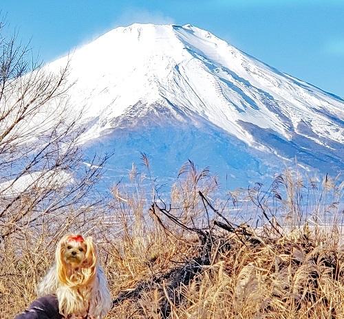 2019年12月30日からの正月旅行-2019年12月31日②富士山見納めの裸ん歩 (3)