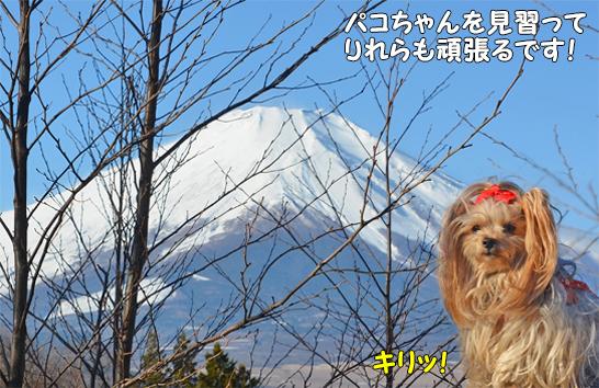 (blos)2019年12月30日からの正月旅行-2019年12月31日②富士山見納めの裸ん歩 (15)