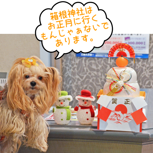 2019年12月30日からの正月旅行-2020年01月03日⑤箱根ルチア 林のドッグラン (18)(blos)