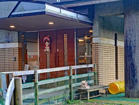 2019年12月30日からの正月旅行-2020年01月03日⑤箱根ルチア 林のドッグラン (16)(blos)jpg