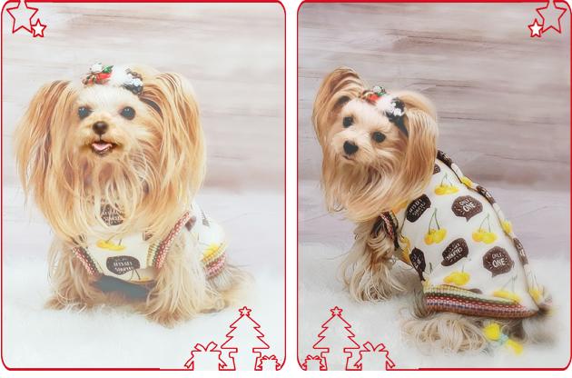 2019年12月17日ジュリアンママさんからクリスマスプレゼントをいただく 黄色いサクランボのお洋服 (7)blos