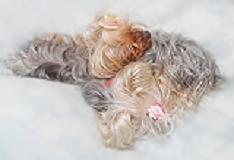 2012年03月19日りれらはパコの枕です(すっかりお馴染みの光景)openingsize