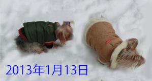 2013年1月13日雪 openingsaize