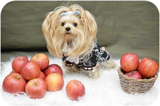 2019年12月26日トト母さんからリンゴをいただきました (1)