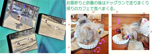 2012年03月29日れ~ろの一周忌(お墓参り#14) (70) - openingsize