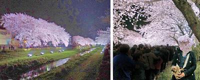 2012年04月10日野川のライトアップを見に行く (10) openingsize