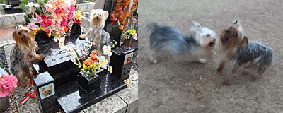 2012年04月17日お墓参り#15(雨) ーopeningsize