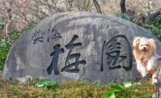 2020年02月19日伊豆旅行①熱海梅園 (1) blos