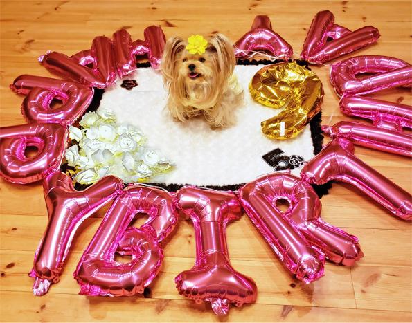 ㉑2020年02月19日リー誕パーティー バルーン2 (1) blos
