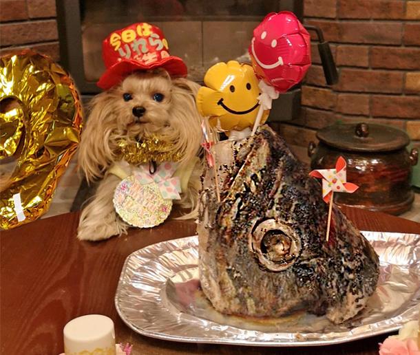 2020年02月19日なぎさテラス㉛2020年02月19日マグロの頭でリー誕パーティー (7) blos