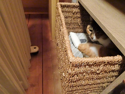 ここで寝るそうです。