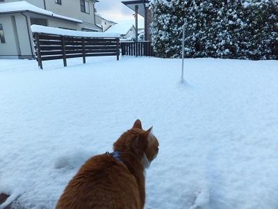 こんなに雪が!