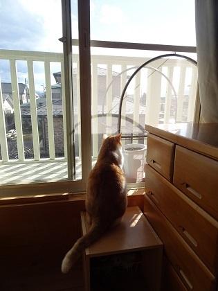 窓を開けたら