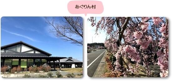 あぐりん村0326桜2